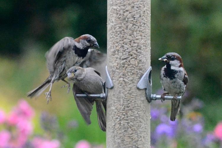 sparrow raid 1