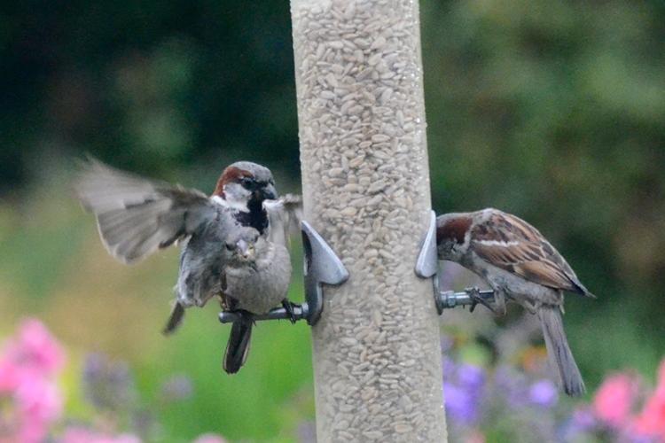 sparrow raid 3