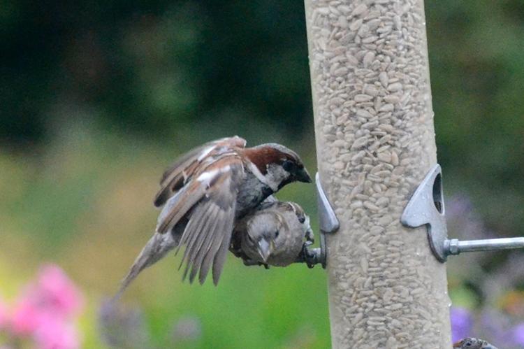 sparrow raid 4