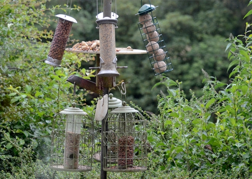 sue's feeders