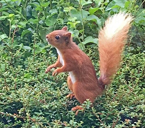 sue's squirrel