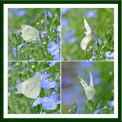 white butterfly panel
