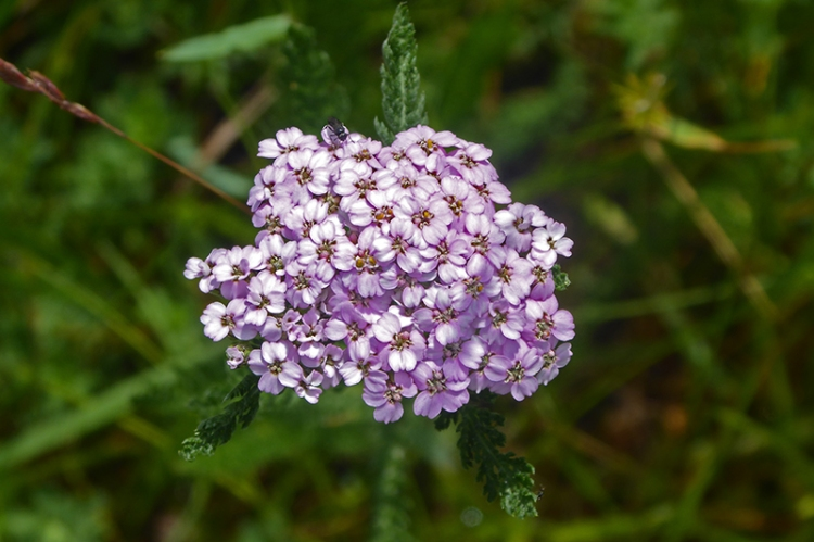 yarrow by road