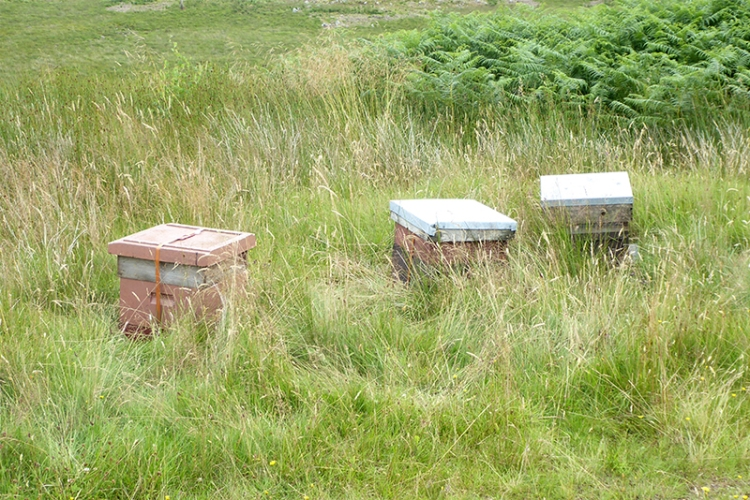 bee hives on moor