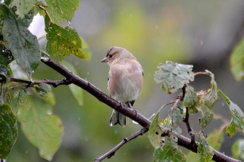 bird on plum tree