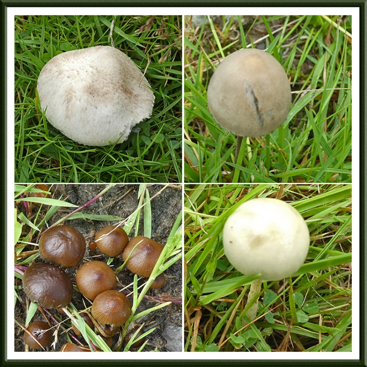 Boyken burn fungi