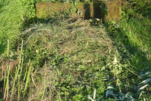 dead nettles