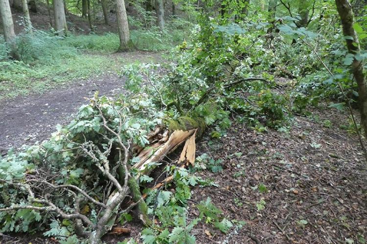 fallen oak branch easton's walk 2