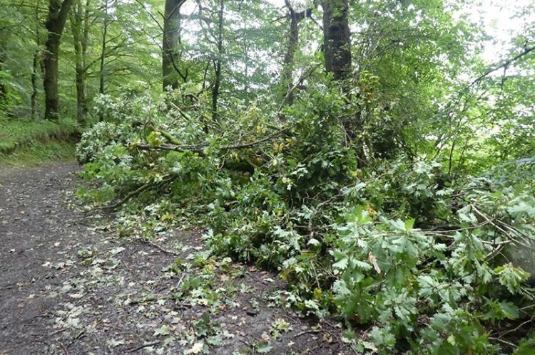 fallen oak branch easton's walk