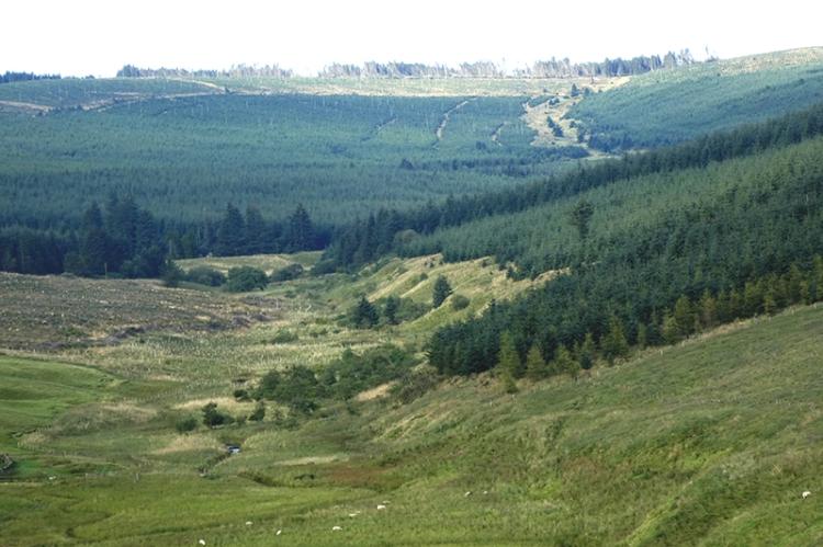 forestry above meggat
