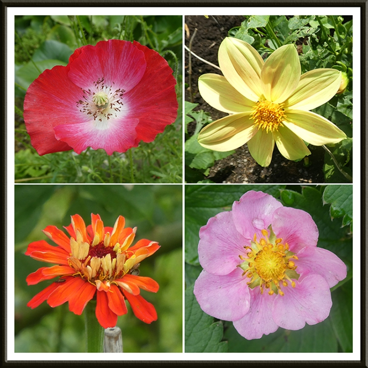 four bright flowers