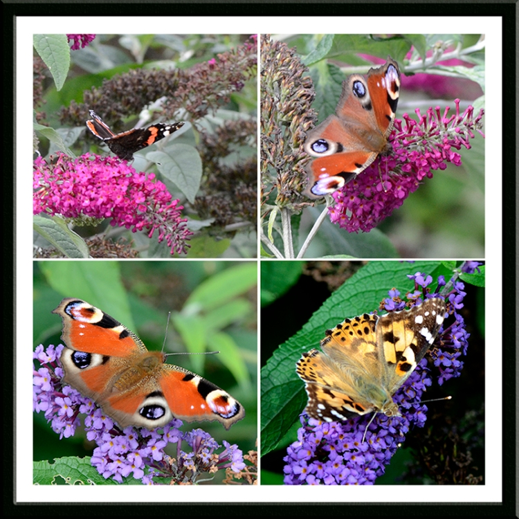 four butterfly panel