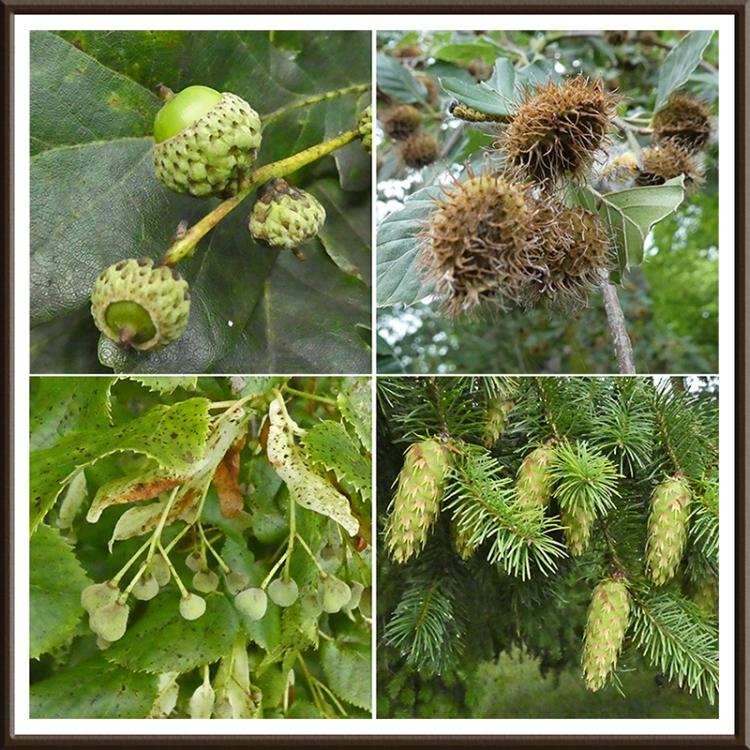 four tree fruits Castleholm