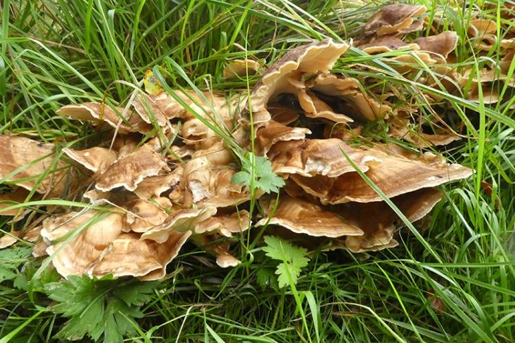 fungus Lodge walks