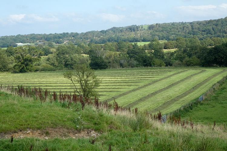 grass cut at grainstone