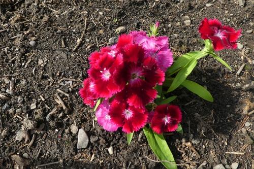 new flowers