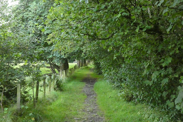pheasant hatchery track
