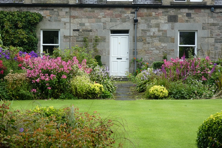 phlox at end of lawn
