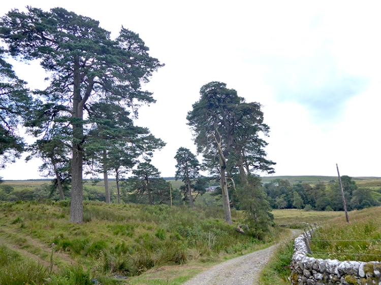 pines at Middlemoss