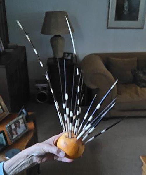 porcupine quills