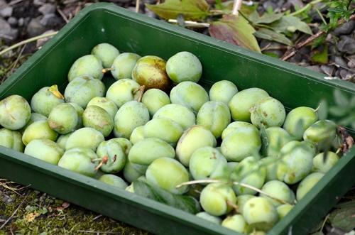 redundant plums