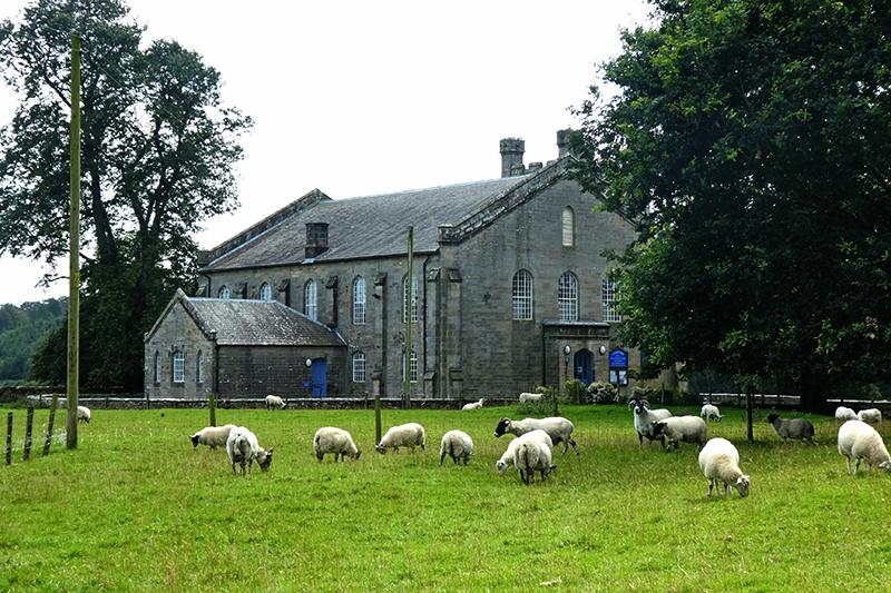 sheep canonbie church