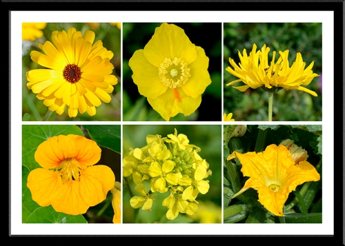 six yellow flowers