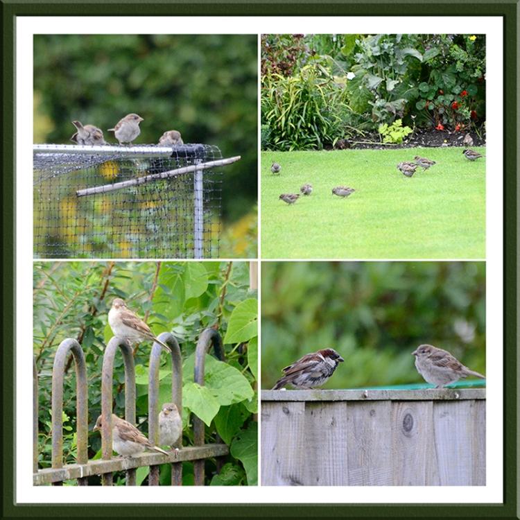 sparrows in a row