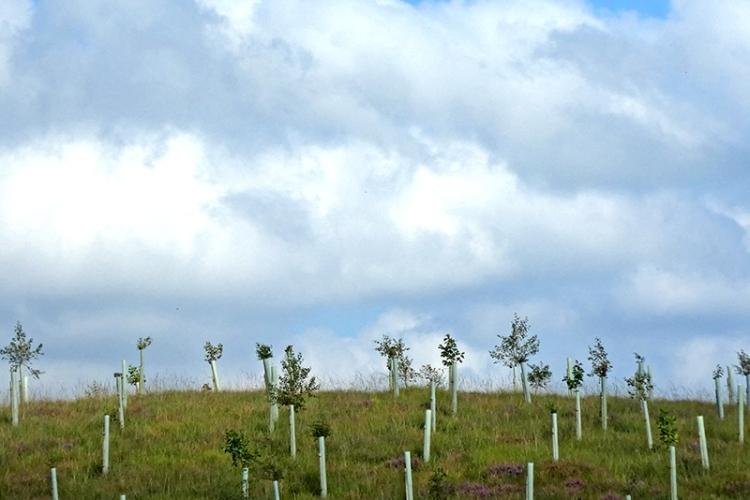 successful tree tubes