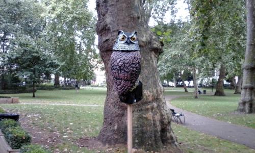 Susan's owl