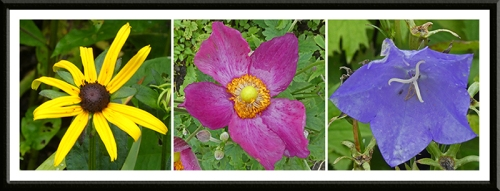 three bright flowers august