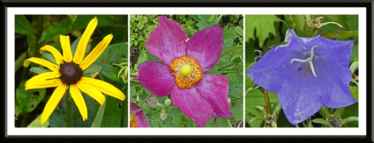 three bright flowers august