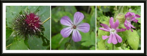 three purple wild flowers