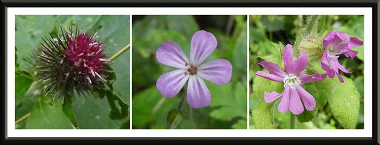 three purple wild flowers