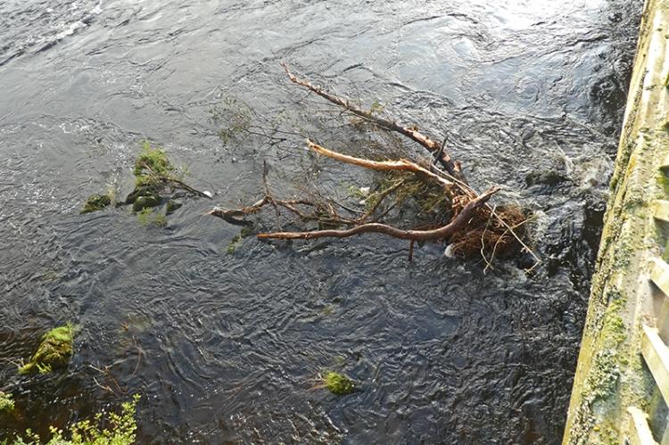 tree under town bridge august