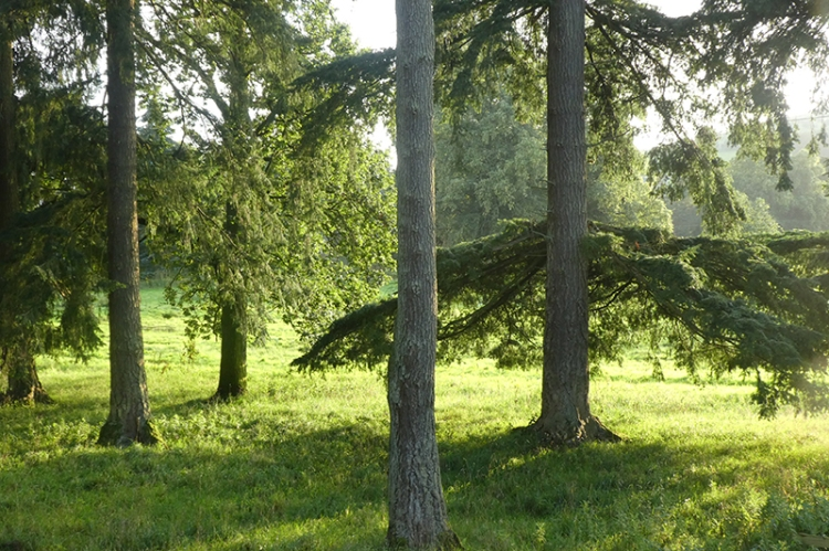 trees on castleholm sunset