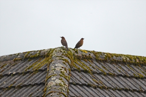 two birds not speaking