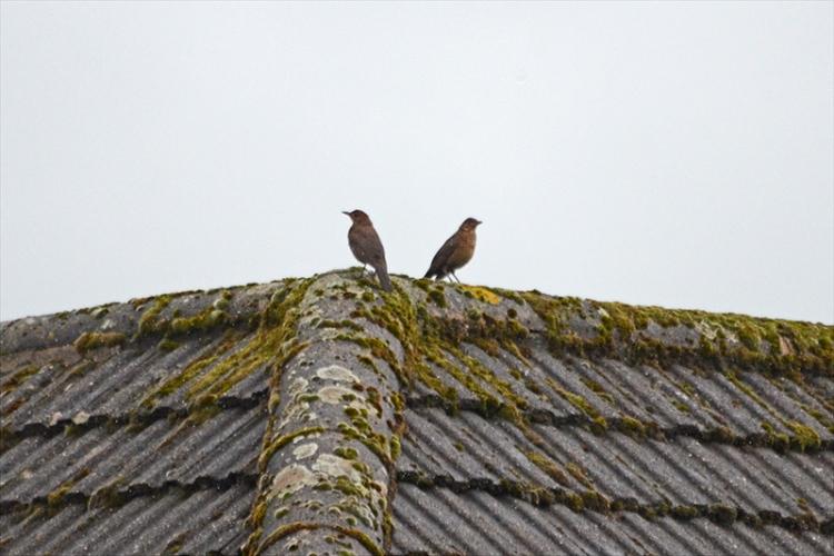 two birds not speaking