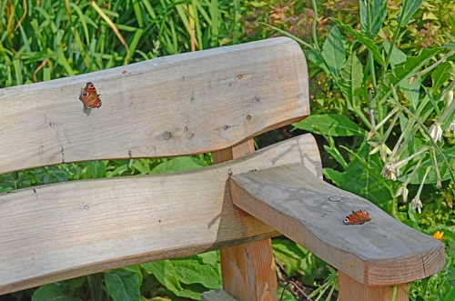 two butterflies on bench