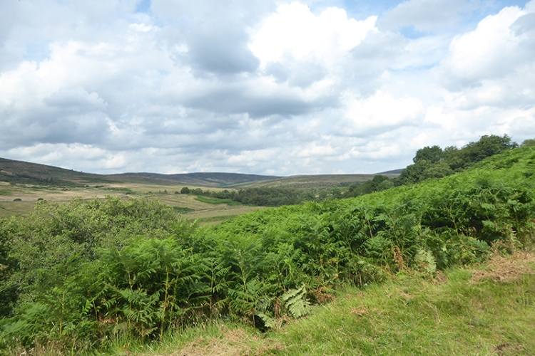 view near Cronksbank