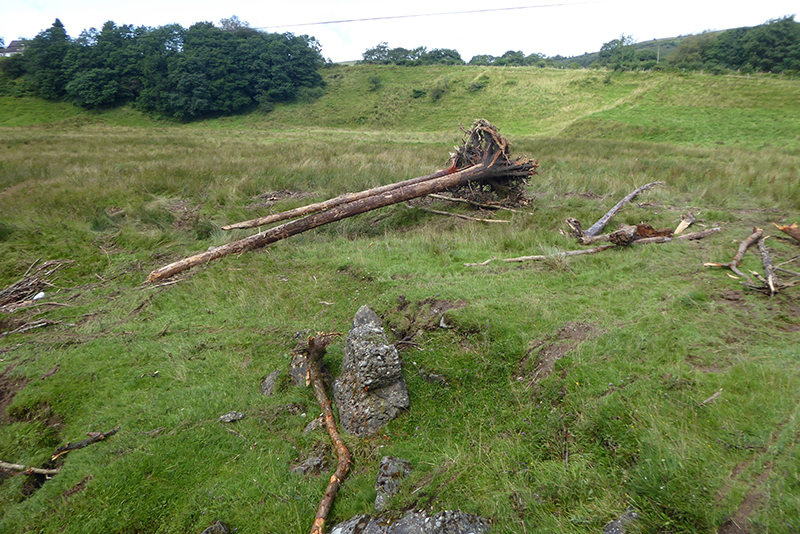 washed up trees auld stane brig