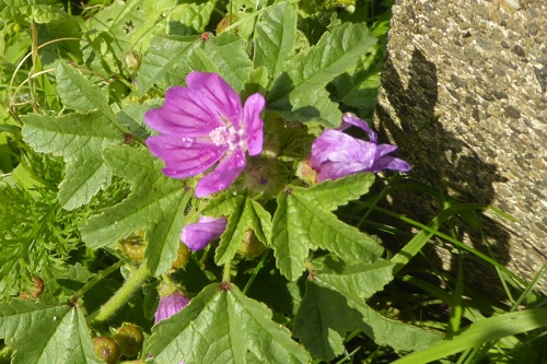 wild flower powfoot