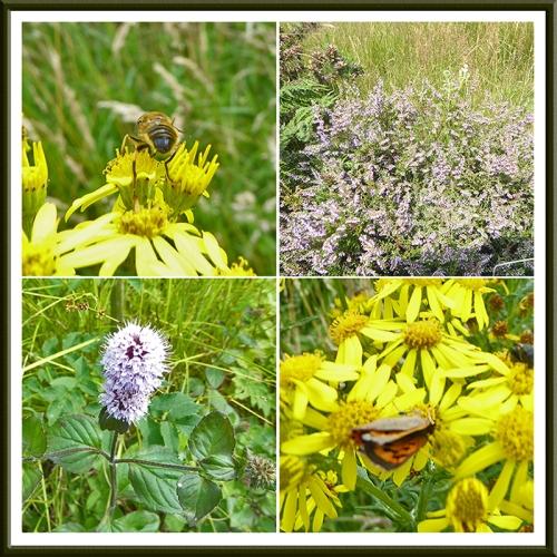 wildflowers broomholm road