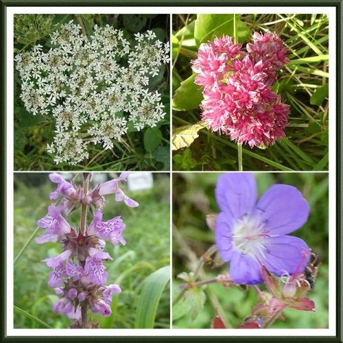 becks flowers
