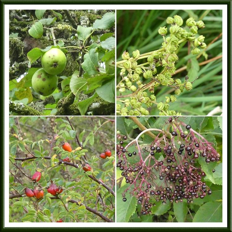 becks fruits