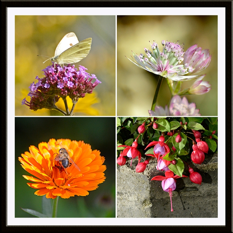 bee, butterfly and flowers