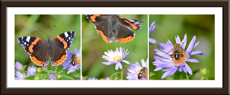 butterfly and bee on daisy