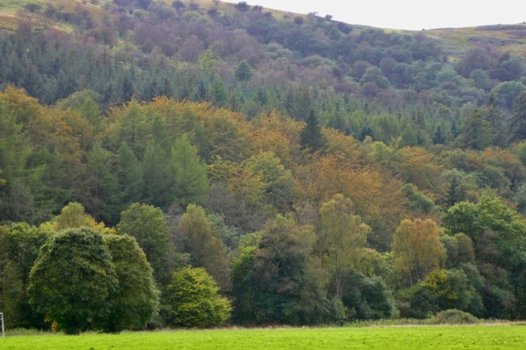 castleholm trees seprember