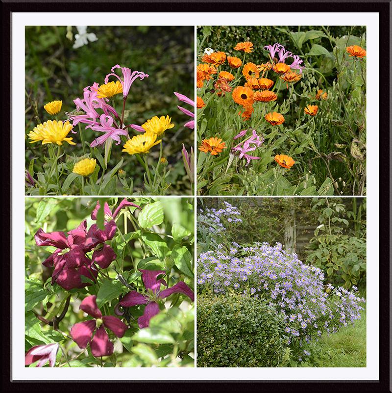 clrematis, daisies, nerines