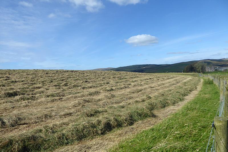 cut grass mid september